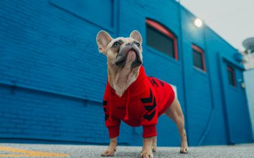 best pet insurance for French Bulldogs