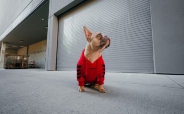 French Bulldog Lovers Gifts: Great Ideas To Start With Today!